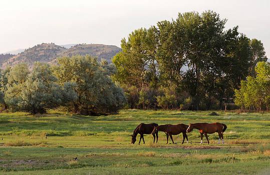 Three beautiful grazing horses by Dana Moyer
