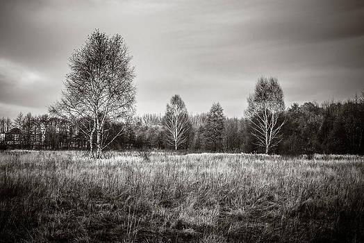 Three Birches by Michal Kabzinski