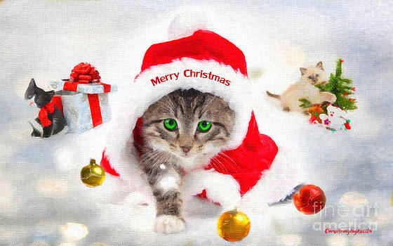 Three Christmas Kittens by Chris Armytage
