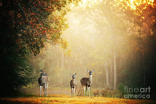 Three Deer by Katya Horner