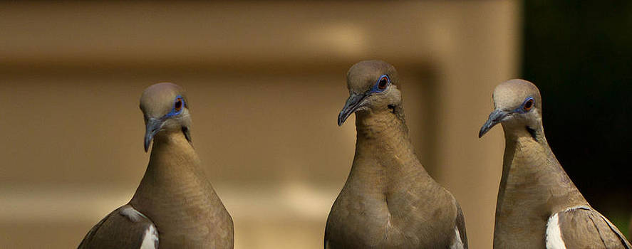 Bonnie Davidson - Three Doves