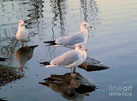 Three Gulls by Marcel  J Goetz  Sr