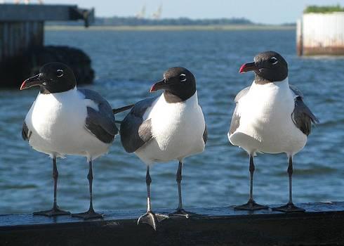 Three Gulls by Rollin Jewett