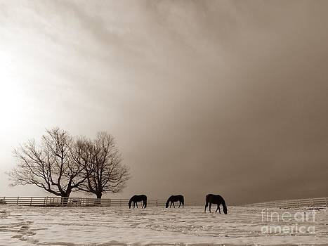 Christine Stack - Three Horses on a Hill At Pineland Farm in Maine