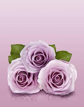 Three Lilac Roses by Gillian Dernie