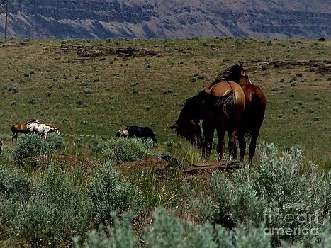 Three Mustang Pairs by Craig Downer