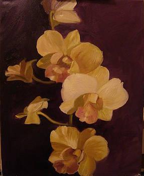 Three Orchids by Laura Skoglund