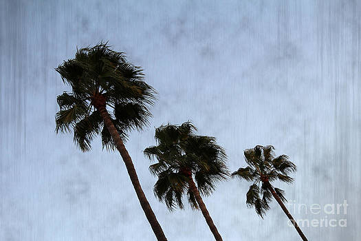 Three Palm Trees by Nina Prommer