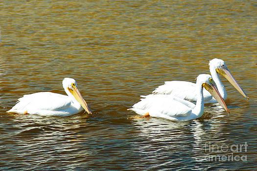 Three Pelican in White by Carol McCutcheon