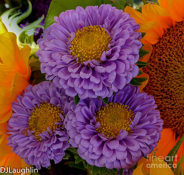 Three Purple Flowers Dahlia by DJ Laughlin