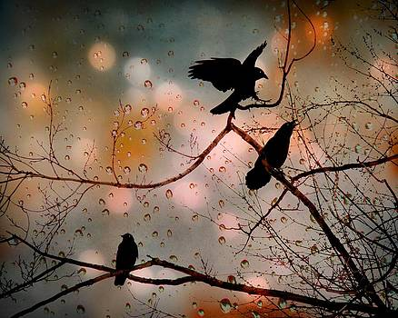 Gothicrow Images - Three Rainy Day Crows