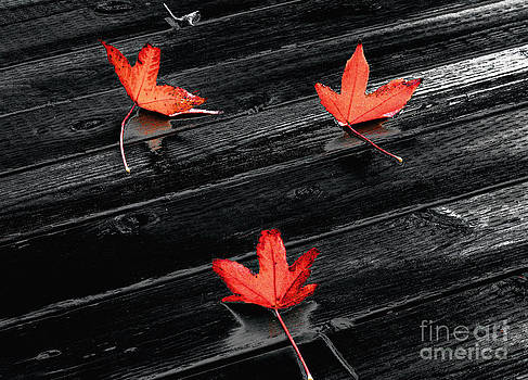 Ellen Cotton - Three Red Leaves after Rain