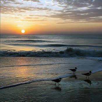 Lynn Palmer - Three Seagulls At Dawn