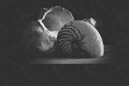 Frank Wilson - Three Seashells