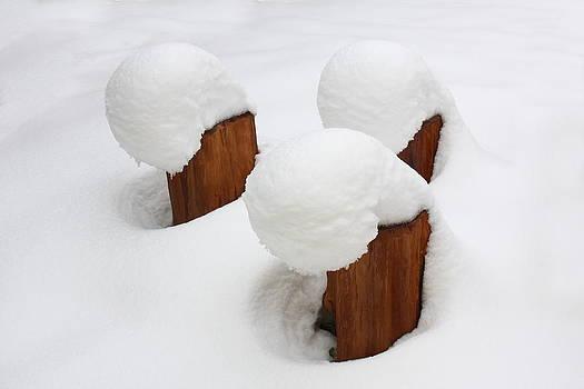 Three Stumps by George Cislariu