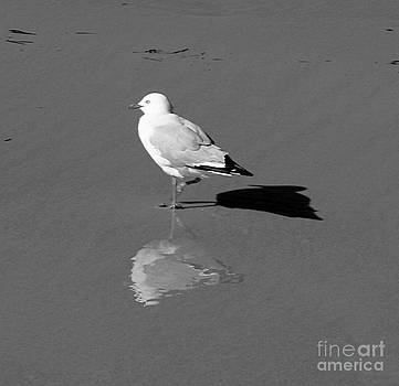 Three Times a Seagull by Sarah Sutherland