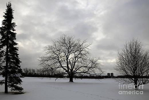 Andre Paquin - Three Trees