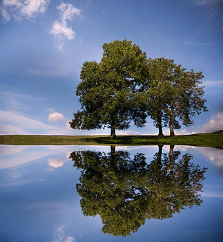 Three trees by Paul Davis