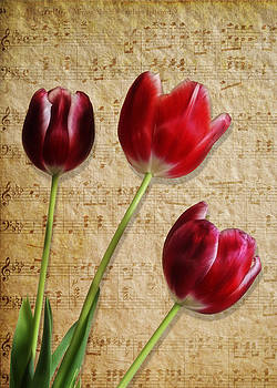 Maria Holmes - Three Tulips and Music