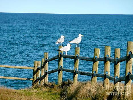 Rachel Gagne - Three Watching Birds