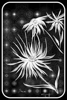 Three White Flowers by Mona  Bernhardt-Lorinczi