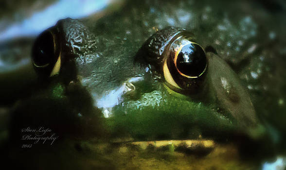 Through a Frog's Eye by Stanley Lupo
