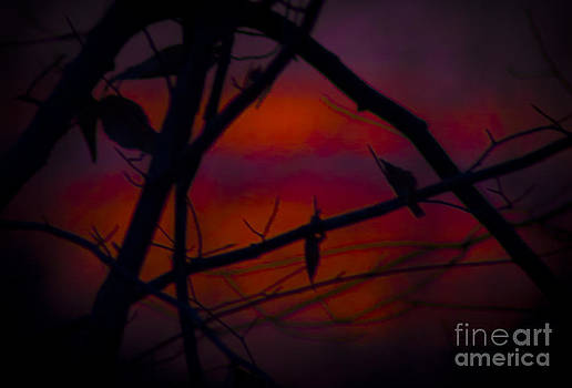 Through the Branch of Color by Debra K Roberts