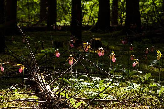 Matt Dobson - Through the Forest Canopy