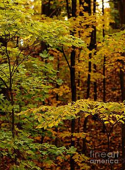 Linda Shafer - Through The Leaves