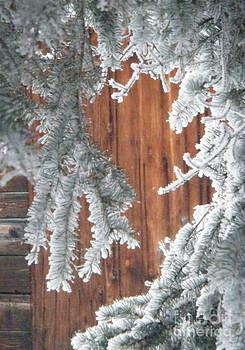 Marianne NANA Betts - through the Pines