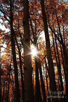 Kate Avery - Through the Trees
