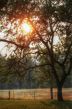 Through the Trees by Melanie Lankford Photography
