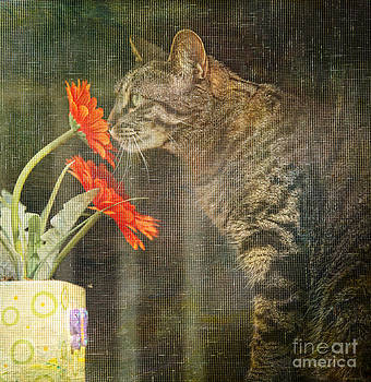 Through the Window by Lori Frostad