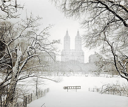 Through Winter Trees - Central Park - New York City by Vivienne Gucwa