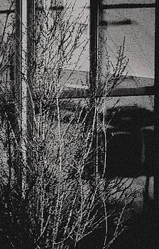 Joe Bledsoe - Through Yonder Window Breaks