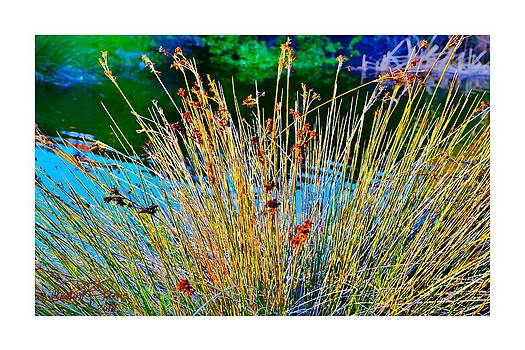 Thru The Looking Grass by Sharon  Lavoie