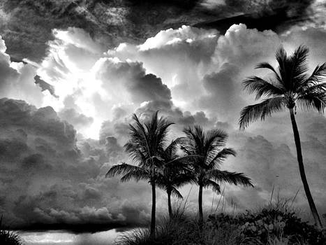 Thunderful by Andrew Royston