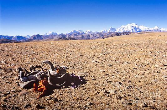 Tim Hester - Tibetan Mountains