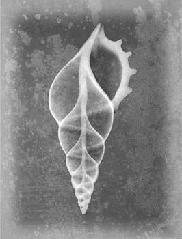Roy Livingston - Tibia Sea Shell X-ray Art