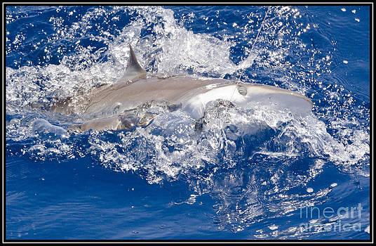 Tiburon by Agus Aldalur