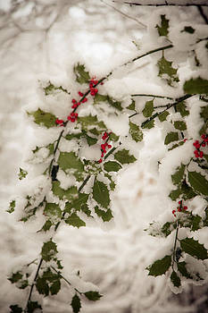 Ticehurst Holly 2  by Dawn Bowery