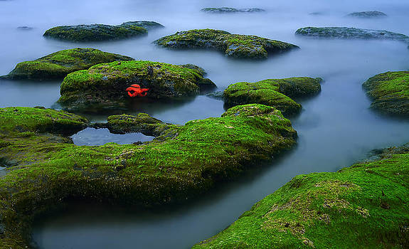 Tide Pool by Jerry Ranch