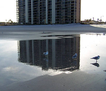 Patricia Taylor - Tidewater Reflections
