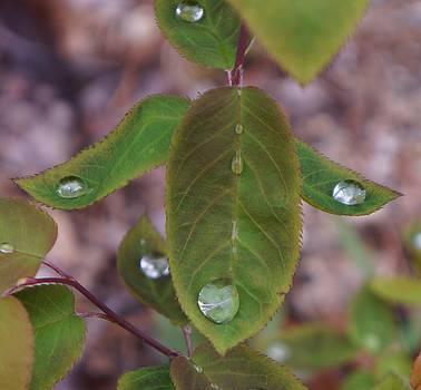 Dawn Hagar - Tiers of drops