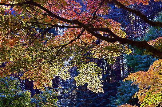 Tiffany Tree by Risa Bender