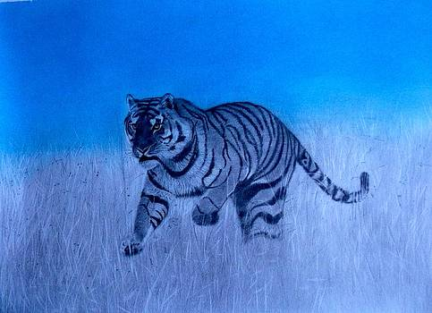 Tiger and Blue Sky by Derrick Parsons