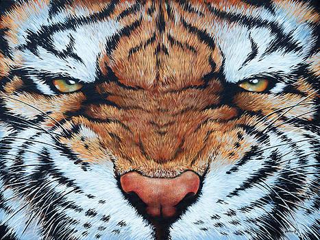Tiger Eyes by Glenn Pollard