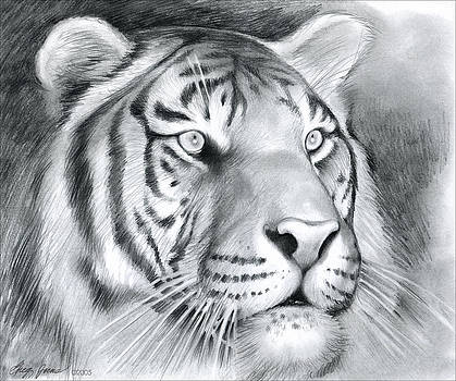 Greg Joens - Tiger