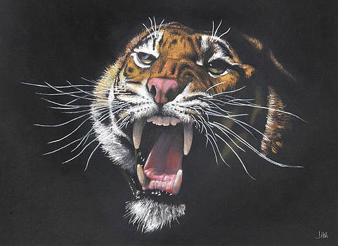 Tiger Growl by John Hebb
