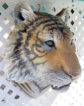 Tiger Head life-size wall Sculpture by Chris Dixon